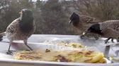 tenedor : Birds peck food