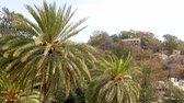 palmen : Palm trees in the wind Stockvideo