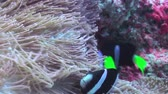 vegetable : A flock school of tropical fish on the reef in search of food. Amazing, beautiful underwater marine life world of sea creatures in Maldives. Scuba diving and tourism. Stock Footage