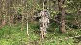 airsoft : Moscow, Russia - May 09, 2013: Airsoft game in the forest. People in military uniforms with weapons at the exercises.