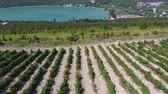 виноградник : Caucasian vineyards in Abrau-Dyurso, Russia. from the height of bird flight