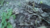 метелка : Camera attached to panicle and cleaning leaves