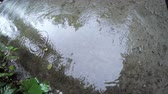 asphalt : Puddle with reflection and worms and coming rain