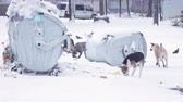 melankoli : Dogs on snow in garbage Stok Video