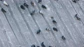 inclinado : Pigeons in park on inclined plane Stock Footage