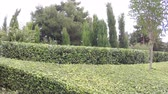 trepadeira : Decorative shrubs in park Vídeos