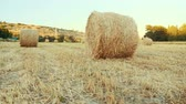 mowed : Wonderful field with harvested haystacks at sunset. Field with the hay. Tracking shot.