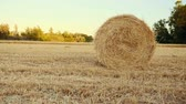 mowed : Haystacks lie on the field at sunset. Rural field in summer with bales of hay, tracking shot