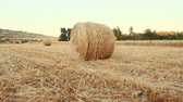 mowed : Tracking shot large amount of hay rolled up in a stack lies on the harvested field