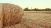 mowed : Rural field in summer with bales of hay. Hay wrapped in a haystack of lies on the field Stock Footage