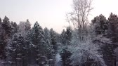 Winter forest. The camera moves smoothly near the treetops. Snowing. 4K shooting