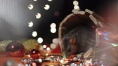 horoscope chinois : Symbol of 2020, the rat sits on the background of a Christmas tree decorated. A gray rat sits in a house on a background of bright lights. Beautiful bokeh. Black background. New Year concept. Vidéos Libres De Droits