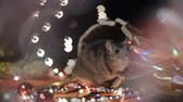 rat : Symbol of 2020, the rat sits on the background of a Christmas tree decorated. A gray rat sits in a house on a background of bright lights. Beautiful bokeh. Black background. New Year concept. Stock Footage