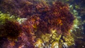 alga : Corals on the bottom of the Balck sea. Shooting in RAW format   Postprocessing.