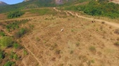 AERIAL VIEW. Horses Grazing At Meadow Near Demerdzhi Mountain Stock Footage