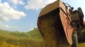 Harvester harvests and pours hay on the field Stock Footage