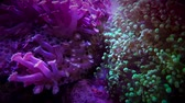 item : Beautiful colourful corals move in water Stock Footage