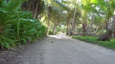 com sombra : Trail shaded by tropical vegetation on the north of Huahine Nui island, Maeva, French Polynesia Stock Footage