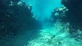 fenda : Rocky underwater landscape, a small canyon carved into the ocean floor, fore reef of Huahine island, Pacific ocean, French Polynesia Stock Footage