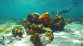 cozumel : Tropical fish and corals underwater on shallow seabed with a man snorkeling in background, Caribbean sea