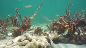 Underwater life on a seabed of the Caribbean sea with sponges, soft corals, and tropical fishes, Mexico, 50fps Stock Footage