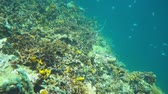 Swimming at the edge of a coral reef with tropical fishes underwater, Caribbean sea, Panama, Central America