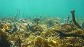 Underwater landscape in a reef of the Caribbean sea with branching fire coral, sponge and fish, 50fps