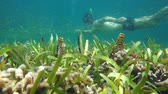 Seafloor with shoal of small fish and a man snorkeling in background, Caribbean sea, underwater scene, Central America, Panama, 50fps