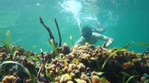 Underwater snorkeling a man looks tropical fish and colorful marine life in a coral reef, Caribbean sea, 50fps