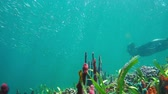 américa central : A shoal of small fish with a man snorkeling underwater, Caribbean sea, 50fps