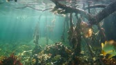 gąbka : Sea life and sunlight underwater in the mangrove, Caribbean sea, Panama, Central America, Bocas del Toro