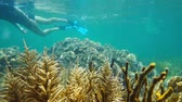 Underwater snorkeling a man exploring a shallow coral reef in the Caribbean sea, Panama, Central America, 50fps