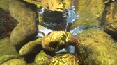 flowing water : Underwater rocks below water surface in a flowing stream, La Muga river, Girona, Alt Emporda, Catalonia, Spain Stock Footage