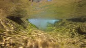 flowing water : Flowing water of a rocky river, underwater scene, La Muga, Girona, Alt Emporda, Catalonia, Spain Stock Footage