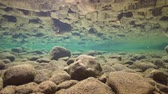 tatlısu : Underwater rocky riverbed in shallow water reflected in the calm water surface, La Muga, Girona, Alt Emporda, Catalonia, Spain Stok Video