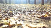 wind gust : autumn leaves fallen in forest park