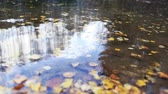 fallen leaves in the pond Stock Footage