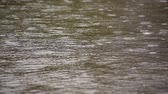 stillness : rainy weather Stock Footage
