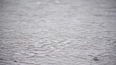 stillness : raining on the pond Stock Footage