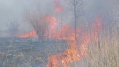 veld : Huge fire. dry grass fire near rural homes. Burning forest and dead trees Stock Footage