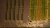 тест : Flying over the field with different varieties of wheat. Scientists are testing the effect of diseases on rye and wheat