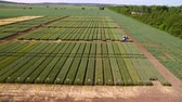 рожь : Studies of rye and wheat varieties. Flying over the field of plots for crop research. Scientists are testing the effect of diseases on rye and wheat
