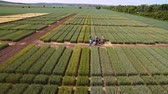 fertilizer field : Studies of rye and wheat varieties. Flying over the field of plots for crop research. Scientists are testing the effect of diseases on rye and wheat