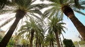 green area : Palm alley in the park. Walk between the palm trees in the park, the view from the bottom to the top