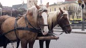 zęby : Two beautiful brown horses harnessed in one harness stand in the center of a big city. Wideo