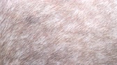 boar : Background for design, horse and pig skin texture