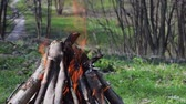 planoucí : Burn fire with wood in the Forest. Green lawn in the forest on the background of fire