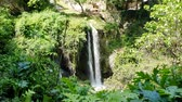 latin american : Magnificent waterfall in Sunny weather in Tivoli wildlife Park, Italy. Stock Footage