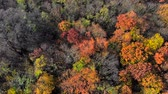 yaprak döken : Aerial view on top amazingly beautiful autumn colors,forests,trees, aerial drone flyover view.