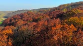 yaprak döken : Looking down on amazingly beautiful autumn colors,forests,trees, aerial drone flyover view.